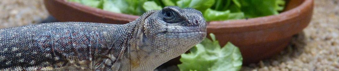 reptile keeper skin care